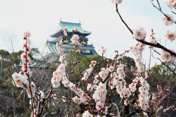 Looking at Osaka Castle's main keep from the plum grove