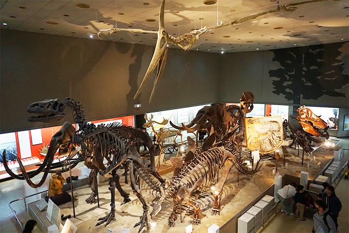 大阪市立自然史博物館 恐龍的骨骼標本